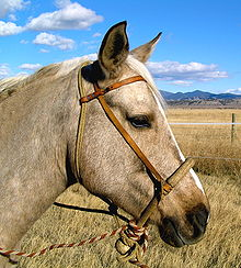 Bosel - A type of bitless bridle.