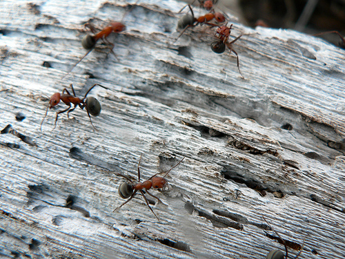 Ants - Pictures of ants working. An inspiratonal example from nature of work team and progress. If our co workers criticize and we do the necessary steps to be better we will make some progress.