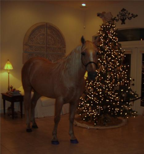 Horse by tree - This is Ivory Pal,a Palomino Tennessee Walker standing by his owners Christmas tree!
