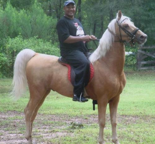He is a horsemen? - I guess he is! this is George Foreman riding a Saddlebred!
