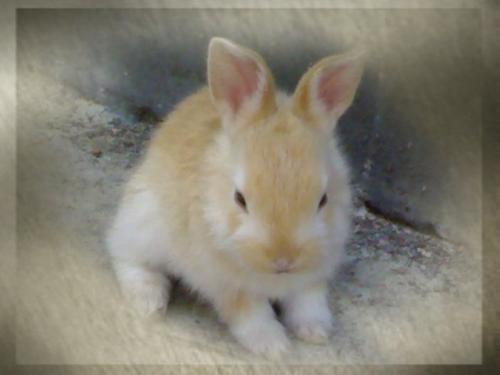 rabbit - My sweet rabbit.