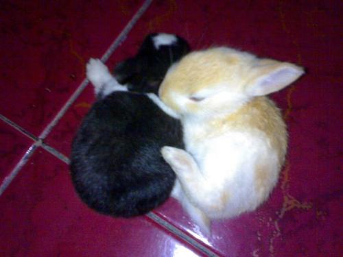 rabbit - Friendship of rabbit.