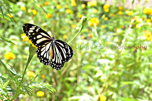 butterfly - a picture i took ^_^