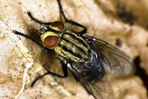 fly - a picture of a dirty fly.
