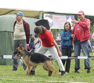 German Shepherd - at CACIB Sibiu 2011