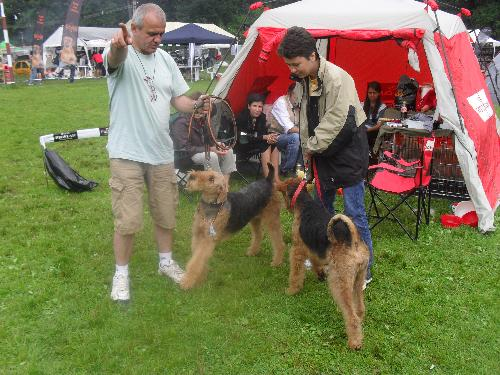 Airedales - at CACIB Sibiu 2011