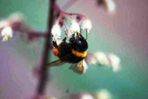 bee - this is a shot of a bee's behind