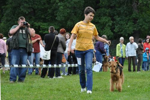 Airedale Terrier - at CACIB Sibiu 2011