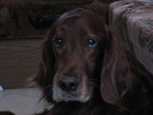 my beloved dog - This is my beloved dog. He is with my mother more than 11 years. And now is very sick.
