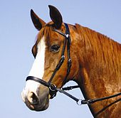 bitless bridle - a western version of a bitless bridle.