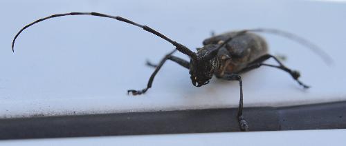 Big beetle - Big beetle sitting on a car