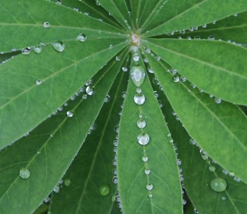 Raindrops - Rain on a green plant