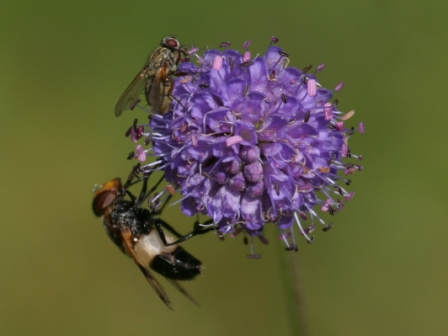 Two insects - Two insects on a flower