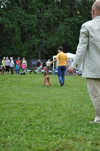 Dog show judging - Airedale - At CACIB Sibiu 2011