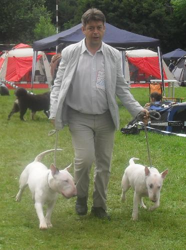 Bullterriers - At CACIB Sibiu 2011