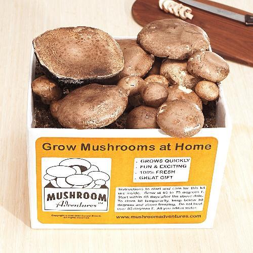 portabello mushroom kit - yummy