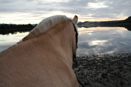 Horse - Horse looking over the fjord