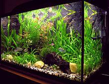 Aquriaum - If like fish and want to enjoy life,buy a aquariaum!