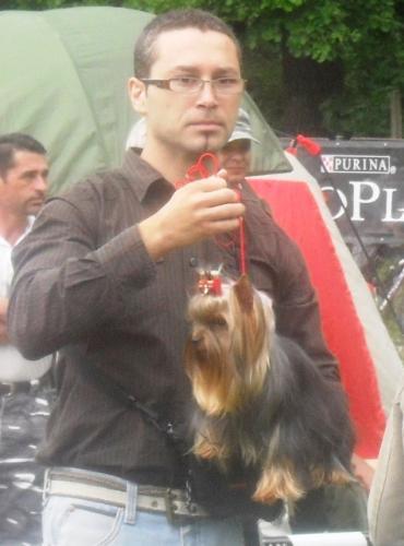 Yorkshire Terrier - at CACIB Sibiu 2011