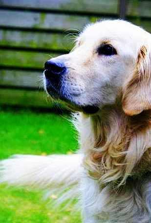 dog - a dog's best friend.