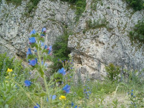 nature in Cheile Nerei - Romania - this picture was taken while hiking in Cheile Nerei
