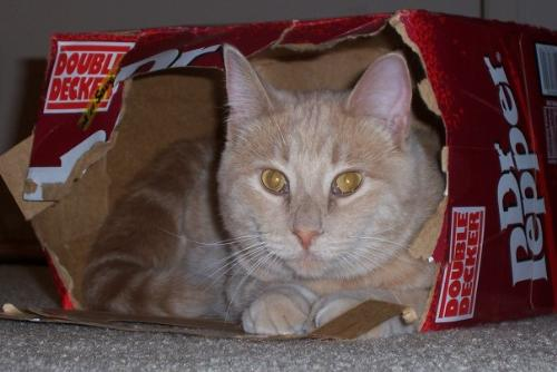 Cat in box - I think this cat wants to be a 'Dr. Pepper' spokesman!