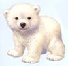 cute bear - cute little white bear