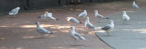 Pigeons - Are these the same as yours?