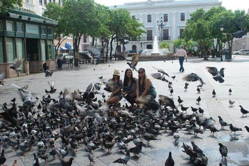 Pigeons - Annoying or Entertaining