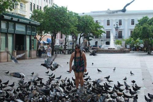 Pigeons - Friendly birds?