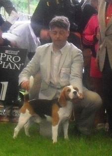 Beagle - At CACIB Sibiu 2011