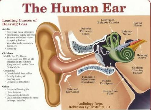 Human ear - The complexity of the human ear