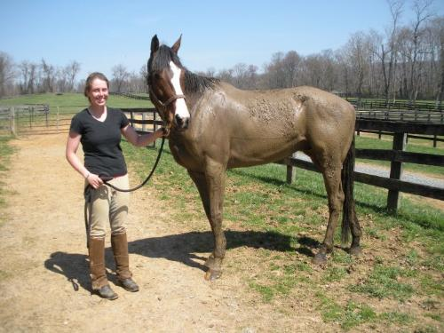 Mud Ball - This is my friend Dawn with her TB Gelding Cobbles Creek. Cobbles loves to roll in the mud! He was like that on his right side,too!