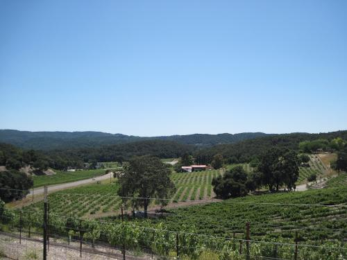 The View Over My Back Fence in July, 2011 - This view looks down toward an intersection that has six tasting rooms on or just off it. The vineyards belong to them. I live on one of the main highways in North San Luis Obispo County Wine County.