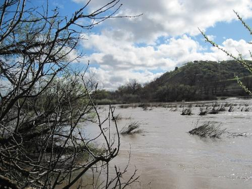 Salinas River as It Flows through Paso Robles in M - This is my local river during the rainy season. During the summer dry season, it disappears underground.