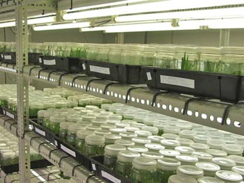 tissue culture - tissue cultured photoes