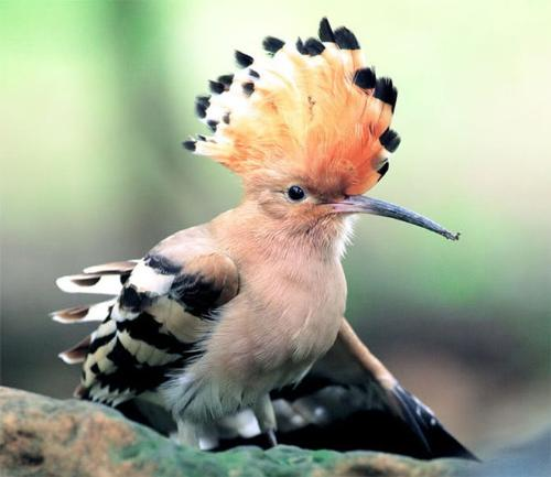 beautiful bird - beautiful birds I've ever seen