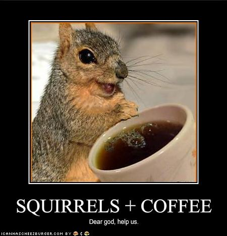 Squirrel + Coffee - A recipe for disaster?