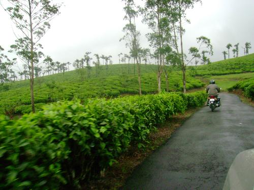 Munnar, Kerala, India - this is a beautiful place in Nilgiri Hills