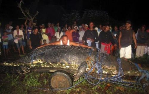 Huge Crocodile found in our coountry - A threat to the village