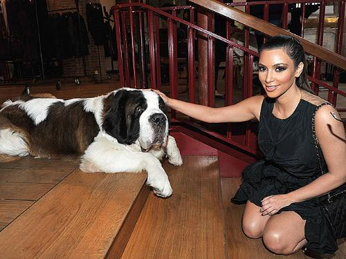 Kim Kardashian  - Here Kim is petting a Saint Bernard.