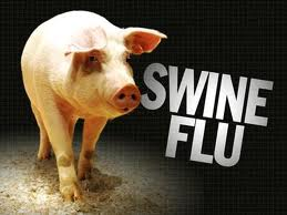 swine flu - swine flu is a disease of pigs. It is a highly contagious respiratory disease caused by one of many Influenza A viruses.