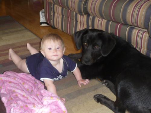 Bubba and Lillie - This Bubba,the Newfoundland?Lab cross with my great niece Lillie. They get along very well.