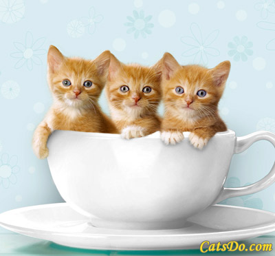 kittens - cute kittens, so cuuuute!