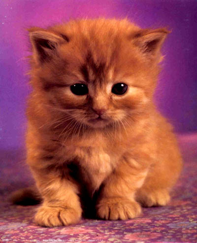 kittens - i love kittens, they're so cute!