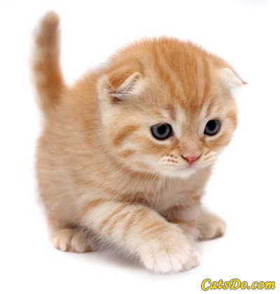 kittens - i love kittens so cute!