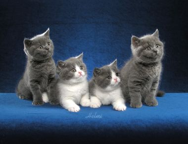 kittens - i love kittens! they're so cute!