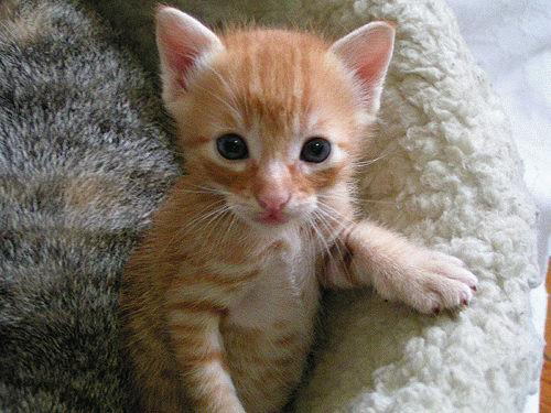 kittens - i love kittens, they're so cute!`