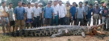 killer crocodile - Happened in the 90's...