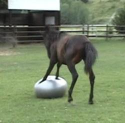 Time for my exercises! - This horse is playing with this ball. It looks like he is doing some push ups! Funny!